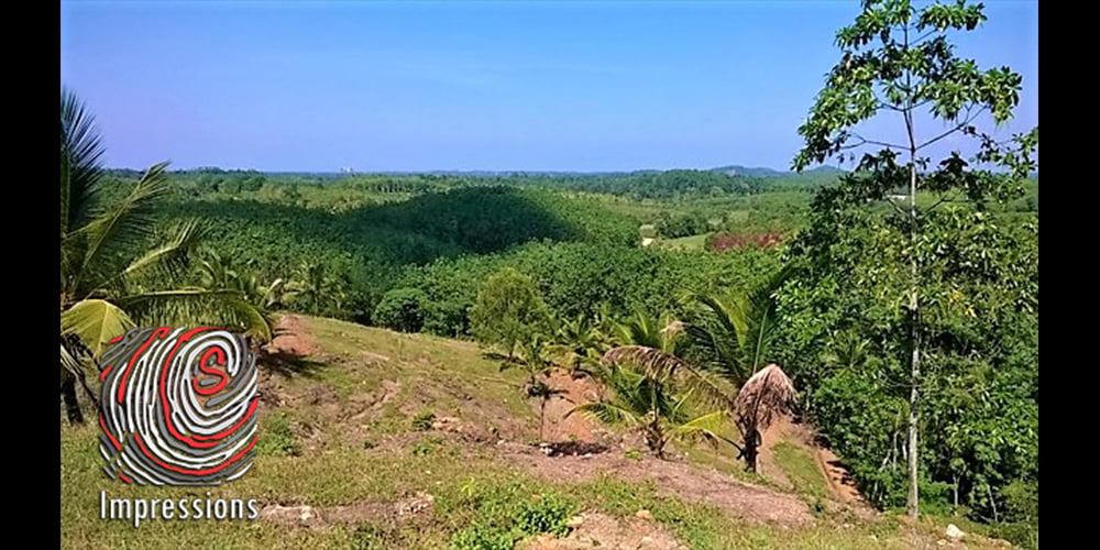 16 Acres plantation in Weligama for SALE