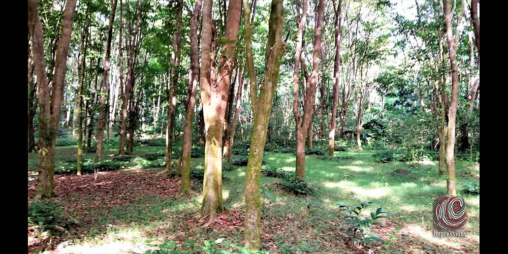 20 acre timber plantation for SALE